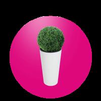 Buxus s květináčem